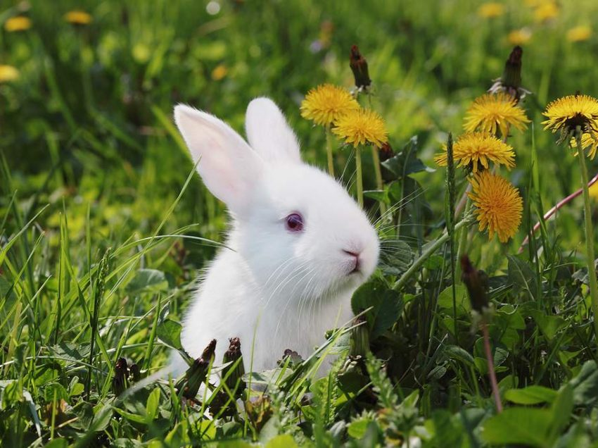 11 Best Type of Rabbit That Are Safe For Children