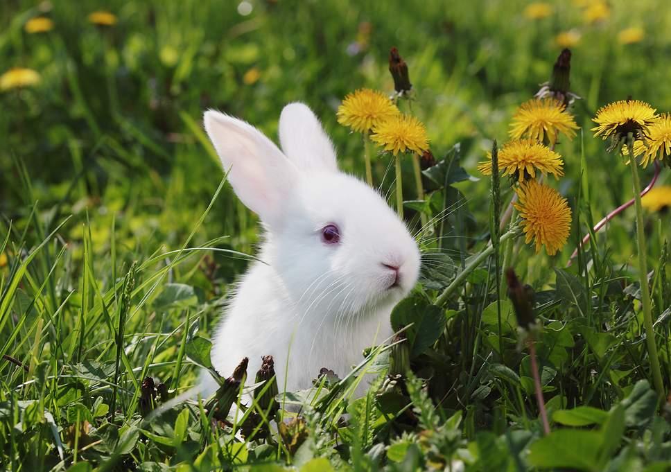beautiful-rabbit