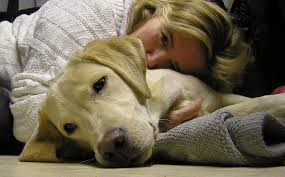 4 Unknown But Deadly Dog Diseases Every Dog Owner Should Know