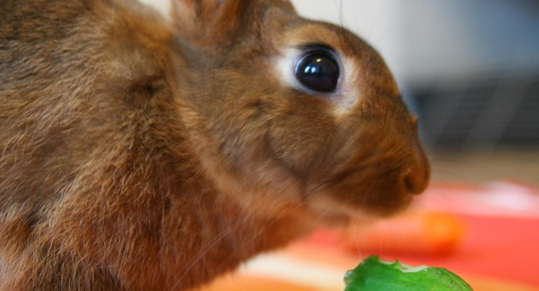 6 Benefit of Cucumbers For Rabbit You Should Know