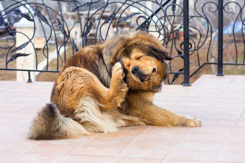 dog-skin-problems