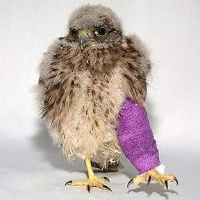 How To Treat Bird's Broken Legs