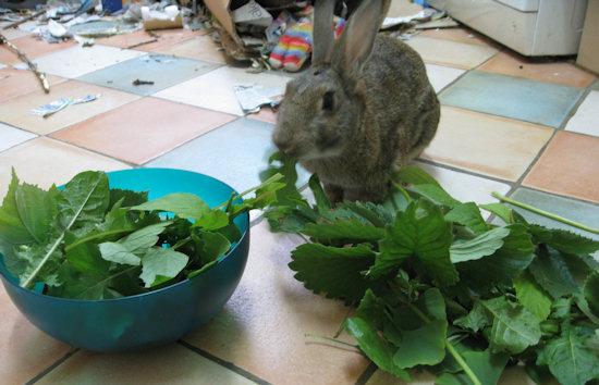 making-rabbit-food