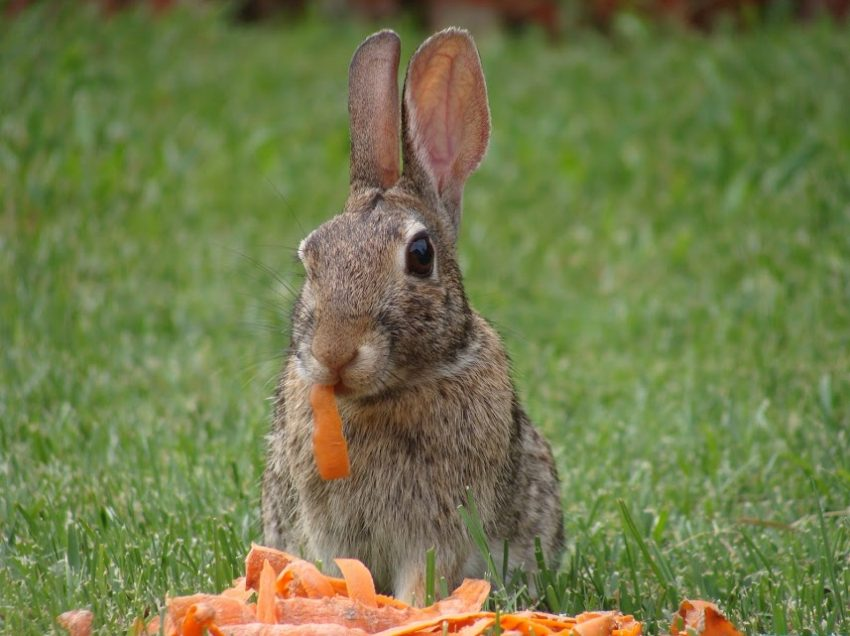 10 Types of Food Rabbits Couldn't Eat