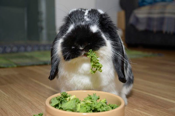6 Foods That Could Harm Your Angora Rabbit