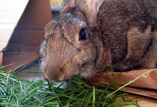 3 Types Of Grass That Are Healthy For Rabbits