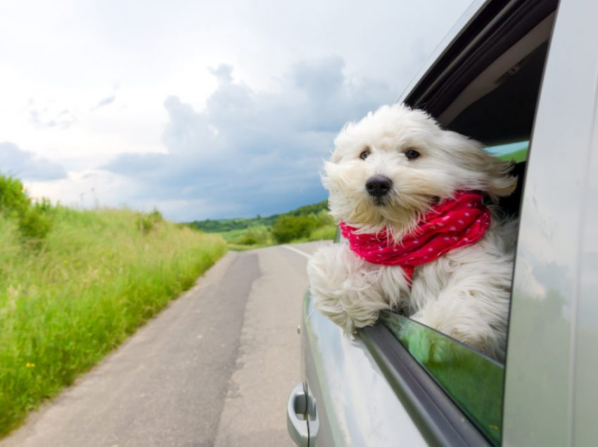 How to safely travel by car with your dog