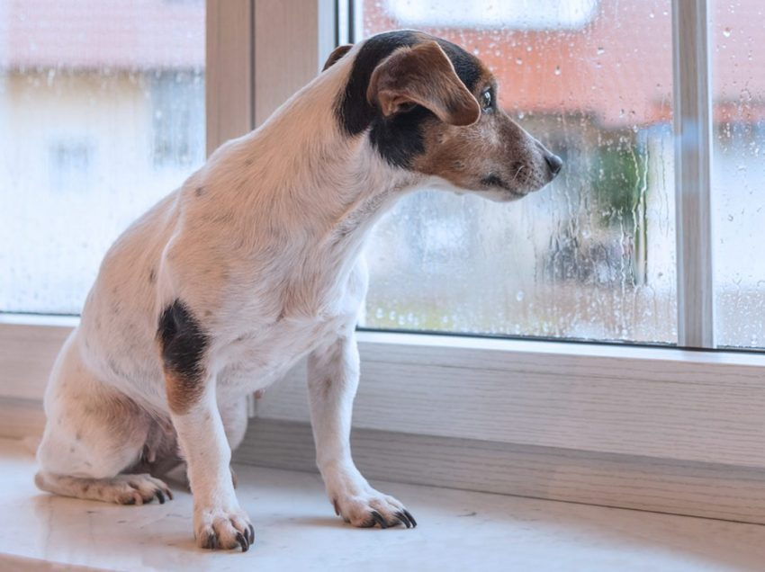3 Surprising Allergies In Dog After Walking In The Rain