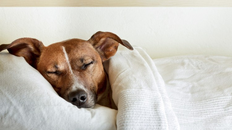 Is It Dangerous To Let Your Dog Sleeps All day?