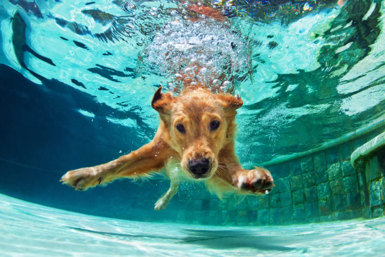 4 Super benefits of taking your dog swimming