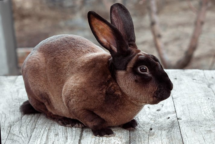5 Most Popular Rabbit Breeds To Pet At Home