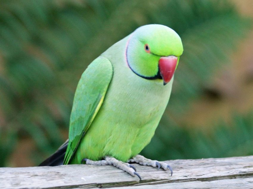 7 Easy Ways To Take Care Of Parrot At Home