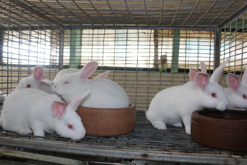 5 Easy Steps To Start Farming Rabbit Business