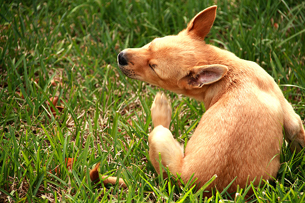 How To Help Your Dog To Get Rid Of Seasonal Allergies