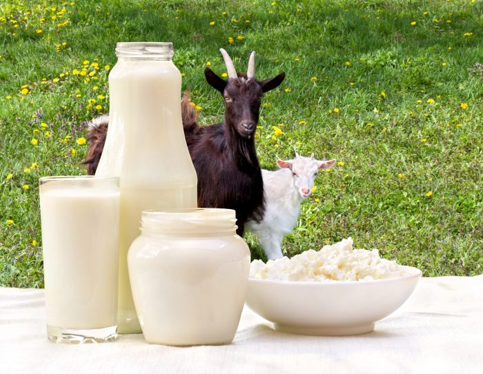 5 Recommended Dairy Goat Breeds to Your Farm