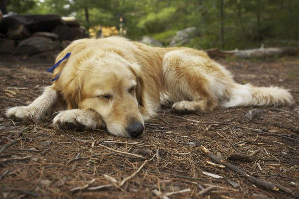 4 safe tips to keep your dog sleep outside at night