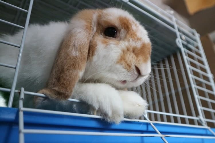 How Much Space Does A Rabbit Need In A Cage?