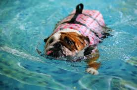 6 Important things you must not do when taking your dog swimming