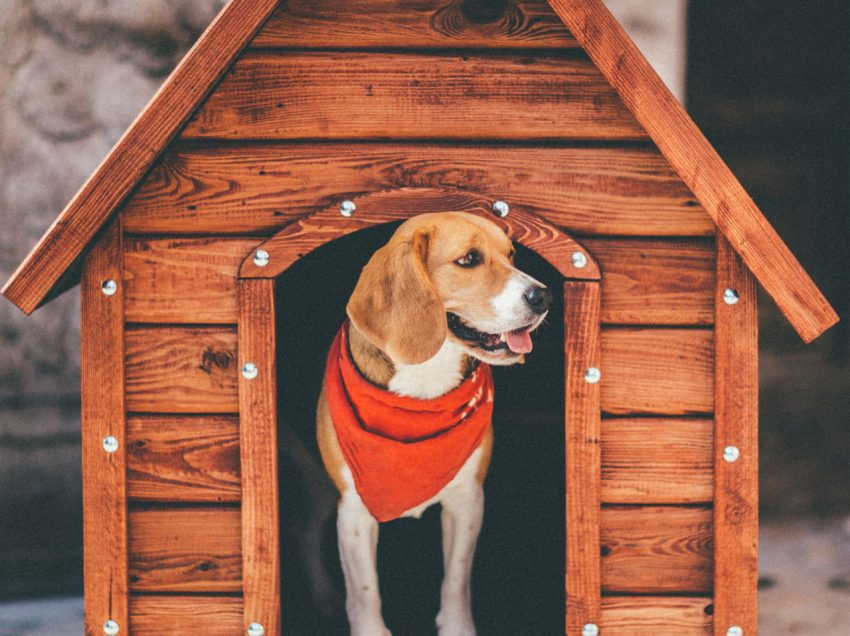 3 Modern Dog House Design Ideas For Outdoor
