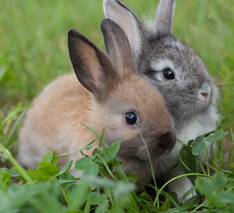 5 Benefits of Feeding Your Rabbit With Moringa Leaves
