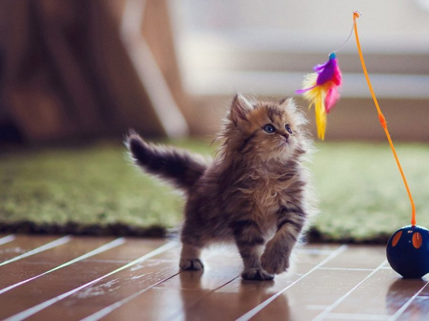 Easy Diy Cat Toys: Make One For Your Baby!