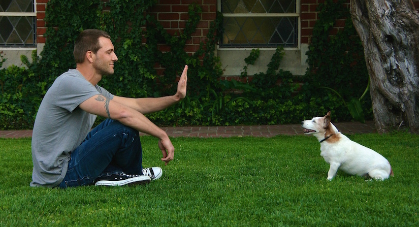10 Essentials Commands You Must Teach Your Dog
