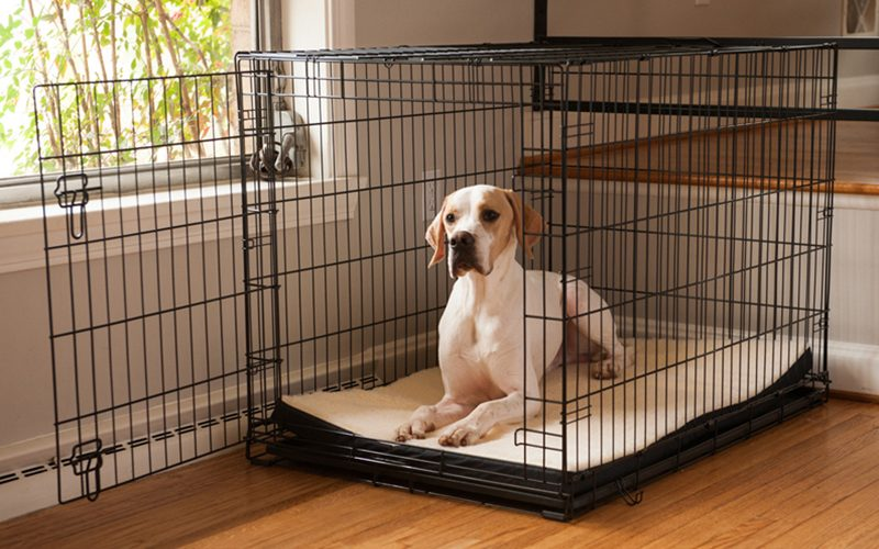 How To Make Your Dog Love Being In The Crate