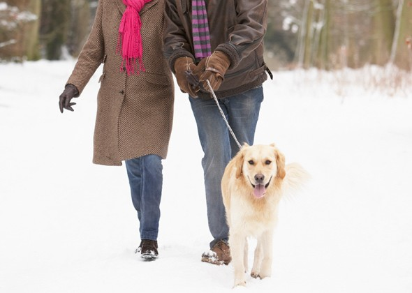 Winter time guide! how cold is too cold to let your dog walk outside?