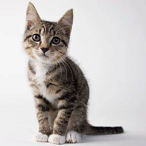 7 Suitable Games That Will Make Your Kittens Go Crazy