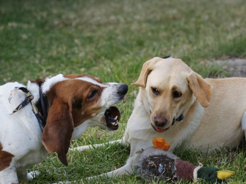 How to Teach Your Dog Not Afraid of Other Dog