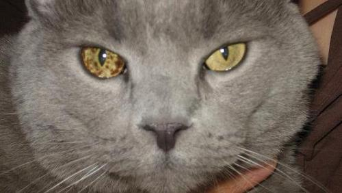 How To Safely Prevent Eye Problems In Your Cat