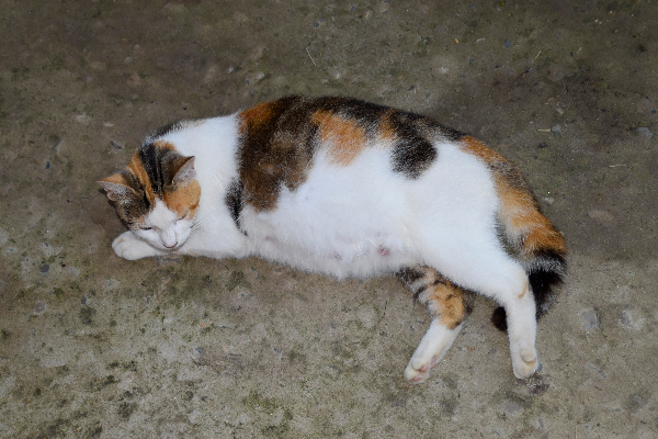 Signs of 1 Week Pregnant Cat