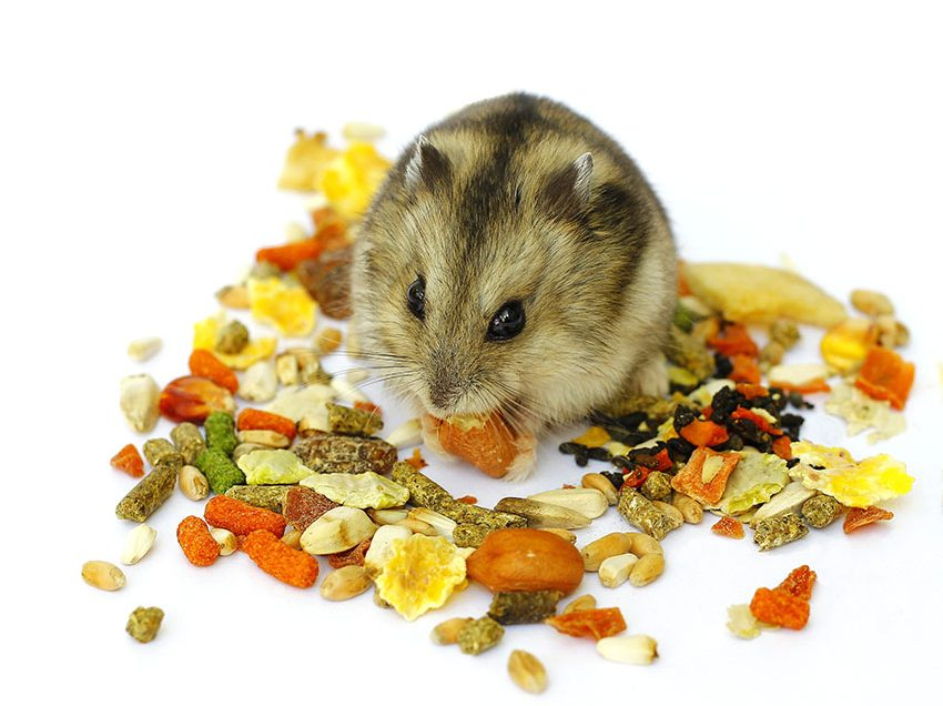 4 Things That Must Be Included in Hamster Food