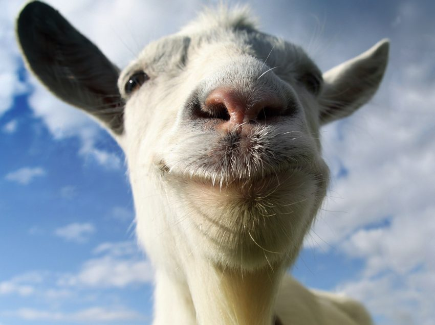 9 Factors That Makes Up a Successful Goat Farm