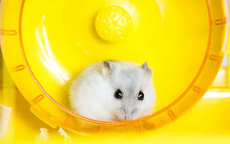 Natural Hamster Habitat That Can Be Created By Yourself