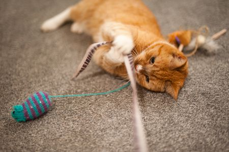 Signs of Cats that Wants to Play
