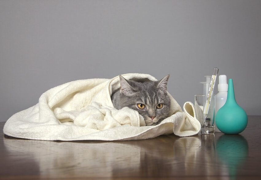 Signs of Cats Recovering from Flu