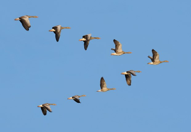 Do The Birds' Migratory Happen To All Species of The Birds?