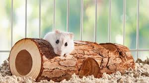 6 Hamster Accesories That Should Be Collected For Your Hamster