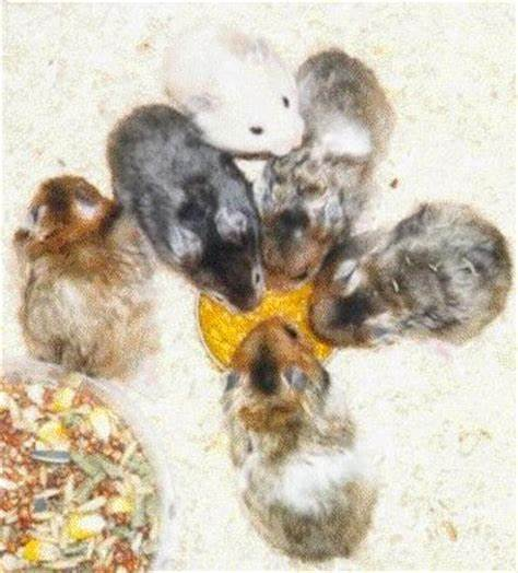 5 Facts About Hamster Breed That You Should Know