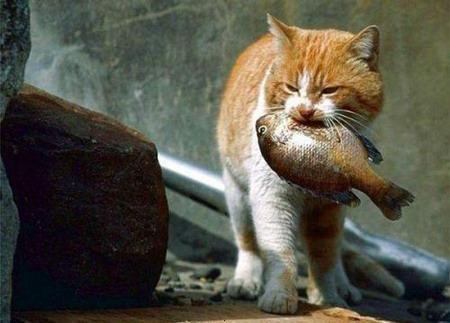 5 Rarely Known Reasons of Why Cat Loves Fish