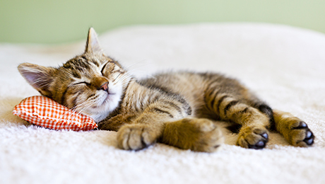 6 Reasons Why Sleeping Cats Should Not be Disturbed