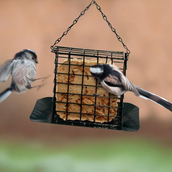Suet Bird Feeding Habit That You Must Understand