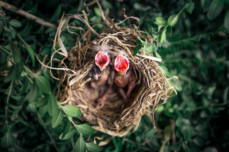 How Can Baby Birds Face Their First Living