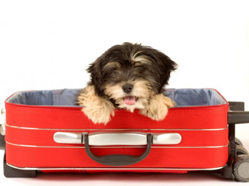 11 Tips to Take Dog Travel Safely