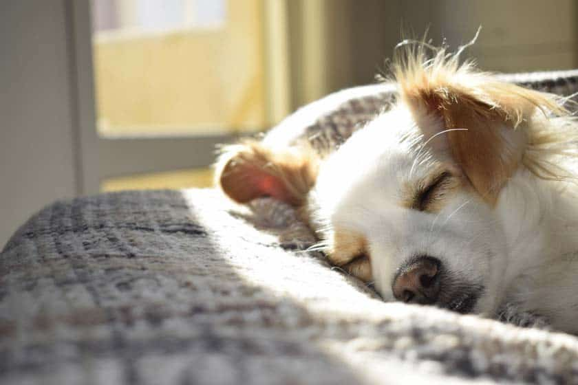 6 Ways to Make Dog Less Lazy and More Active