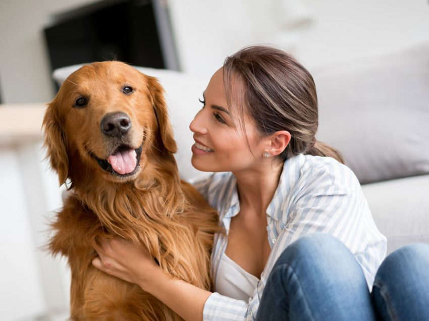 8 Signs of a Loyal Dog that You Should Know