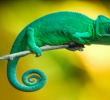 10 Tips on How to Keep Your Chameleon Healthy