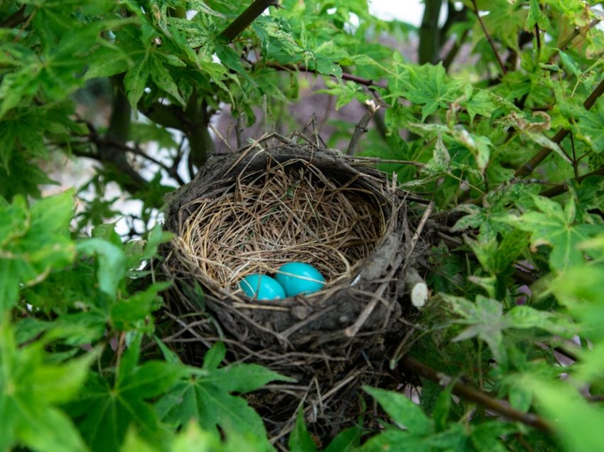How Important The Bird's Nest for Its Life?