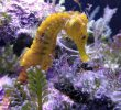 Seahorse are Your New Pets? A Proper Guide to Take Care of Them